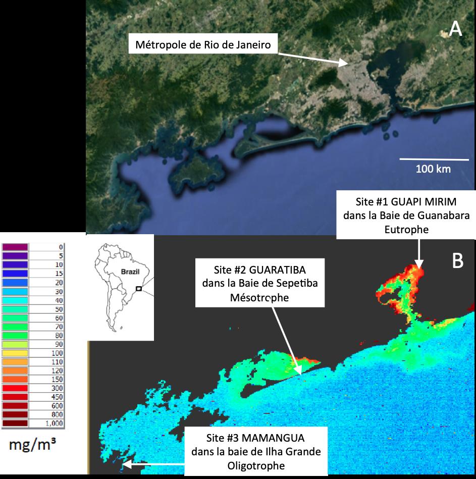 Localisation du site d'étude au Brésil. A : vue Google Earth montrant la région métropolitaine de Rio de Janeiro. B : Exemple de données de concentrations en chlorophylle déduites des images du satellite sentinelle-3a (European Space Agency)