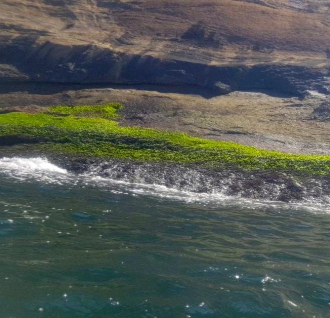 Récif de moules sur la côte rocheuse en région extrêmement eutrophe