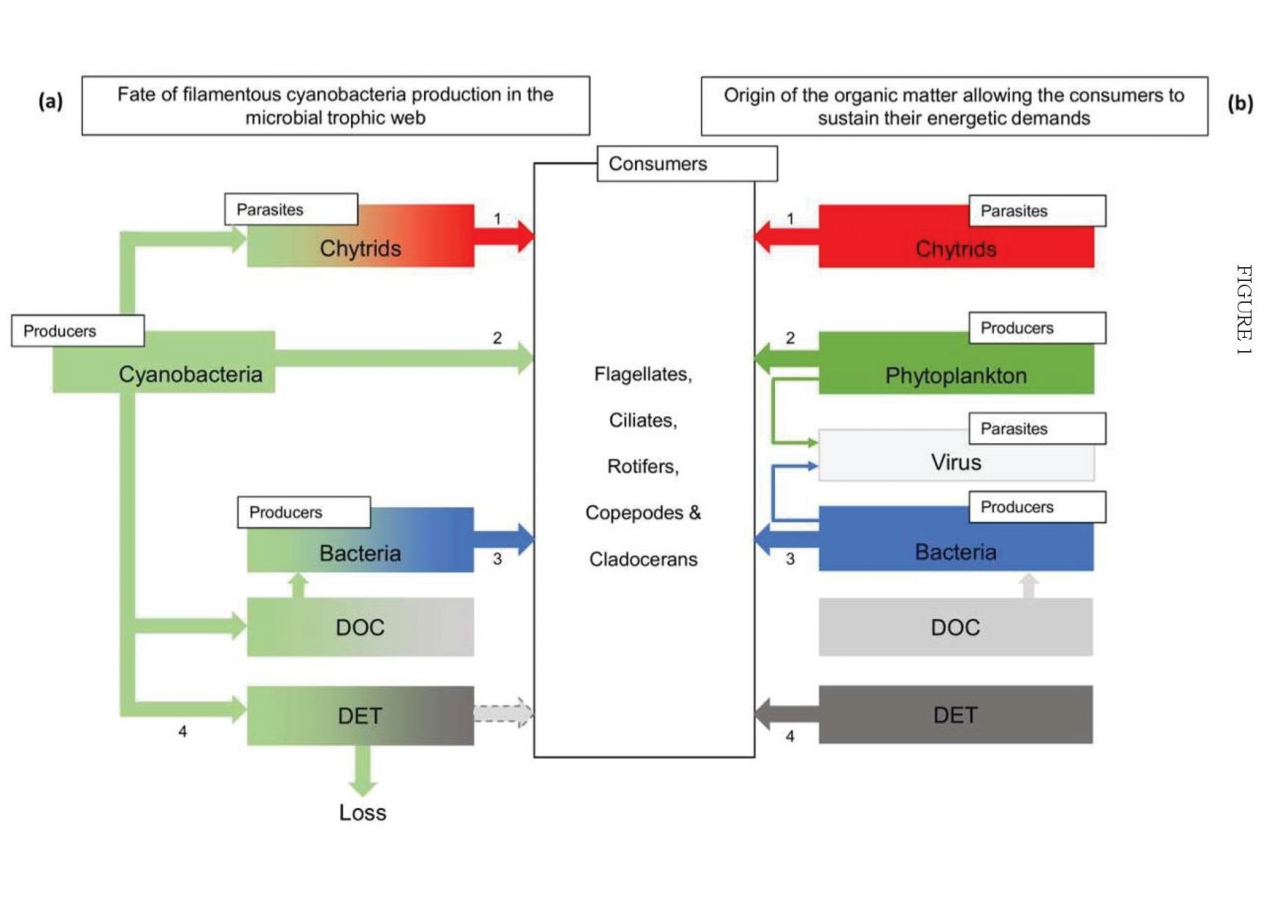Nature Paper Microbial Production