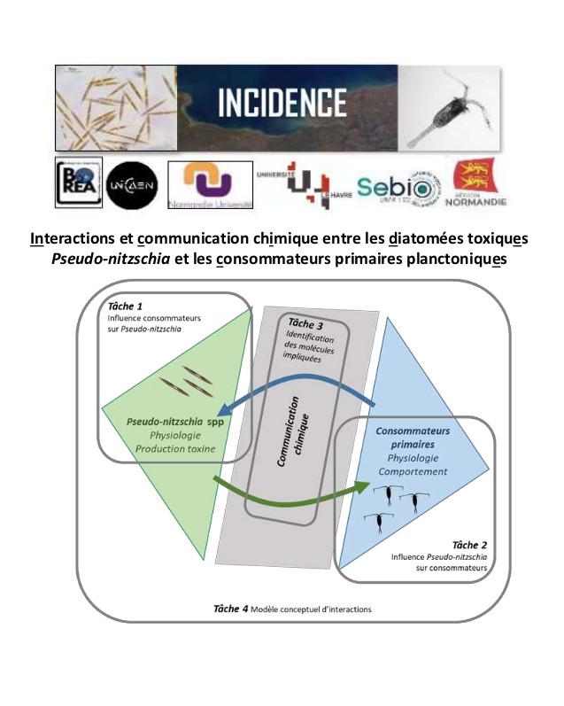 Schéma de l'approche symétrique multi-échelle du projet INCIDENCE Copyright : ©Juliette Fauchot