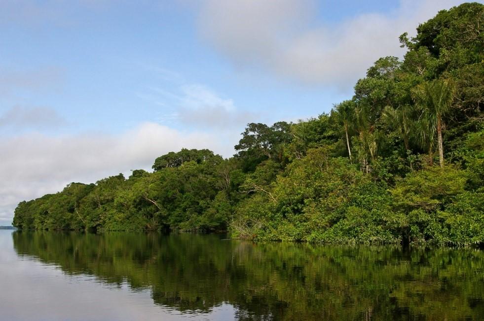 Rives du Rio Negro en Amazonie - IRD/Laure Emperaire