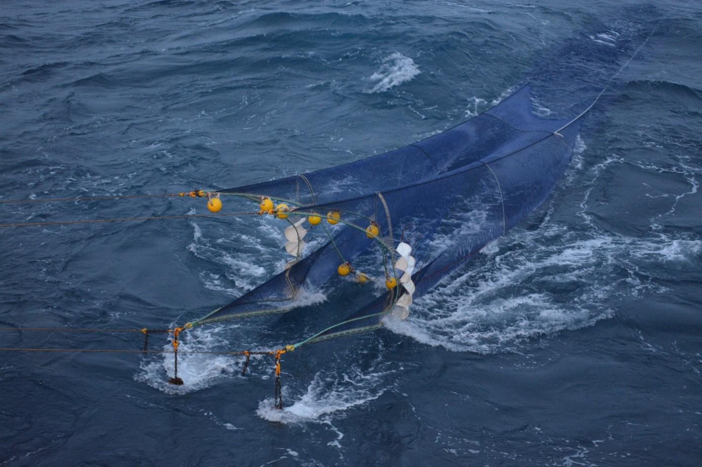 Chalut « mésopélagos » utilisé lors de la campagne MYCTO-3D à Kerguelen (février 2014). photo © Guy Duhamel