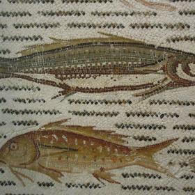 Des poissons, musée archéologique de Sousse