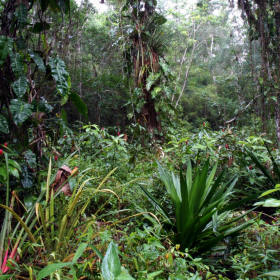 Forêt de Guyane  © IRD/Sabatier, D.