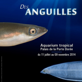 """Exposition """"La vie mystérieuse des Anguilles"""""""