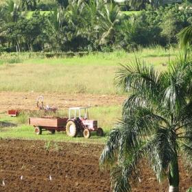 1er Octobre 2014, CDD Ingénieur d'études, INRA Antilles-Guyane