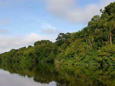 Rives du Rio Negro en Amazonie. Photo IRD/L. Emperaire