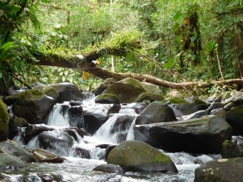 Soutenance de thèse | Lou Frotté : Réponses trophiques et démographiques  aux perturbations de continuité écologique chez les espèces amphidromes de Guadeloupe