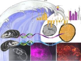Biomineralisations et traits d'histoire de vie