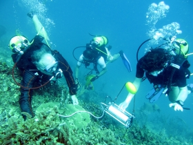 Diving PAM measurements on corals