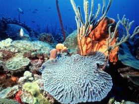 Peuplements coralliens