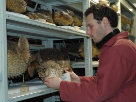 Inventaire des spécimens naturalisés de la collection nationale d'ichtyologie