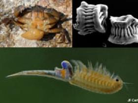 Diversité morphologique des crustacés
