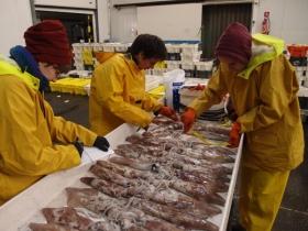 Fish market sampling for long finned squid