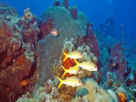 Récif de Guadeloupe. © Y. Bouchon