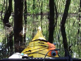 Échantillonnage en mangrove pendant l'émersion à partir de petites embarcations - G. Abril