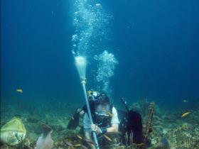Prélèvement de «biofilm» à la suceuse.  (Pointe des Nègres, Guadeloupe). Photo Claude Bouchon