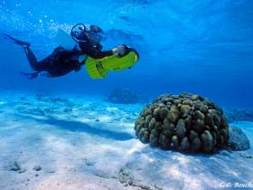 Exploration des fonds à l'aide d'un «scooter» sous-marin (Grand Cul-Sac-Marin, Guadeloupe). Photo Claude Bouchon