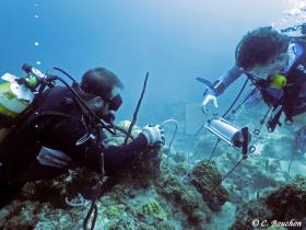 Étude de la physiologie respiratoire des coraux à l'aide d'un fluorimètre submersible «Diving-PAM» (Caye à Dupont, Guadeloupe). Photo Claude Bouchon