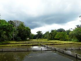 Aquaculture au Pérou. Etangs de pisiculture d'Arapaima, station de Quistococha. Photo IRD/J. Nunez