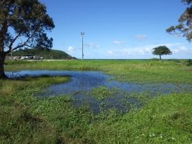 Planète revisitée. Mare, région de Nouméa, Nouvelle-Calédonie,  où vivent 3 grands branchiopodes. Photo Nicolas Rabet