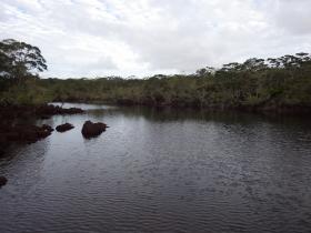 Planète revisitée. Exemple d'un habitat de Lynceus insularis espèce endémique du sud, Nouvelle-Calédonie. Photo Nicolas Rabet