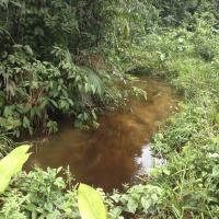 Eaux stagnantes en Guyane  © IRD/R. Gozlan