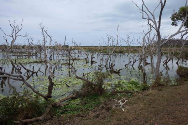 Marécage permanent, Bourail, Nouvelle-Calédonie. © Nicolas Rabet