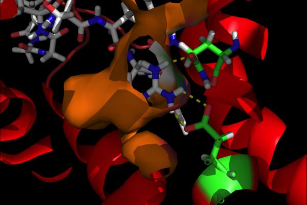 Structure 3D d'un neuropeptide. Photo © Jérôme Leprince