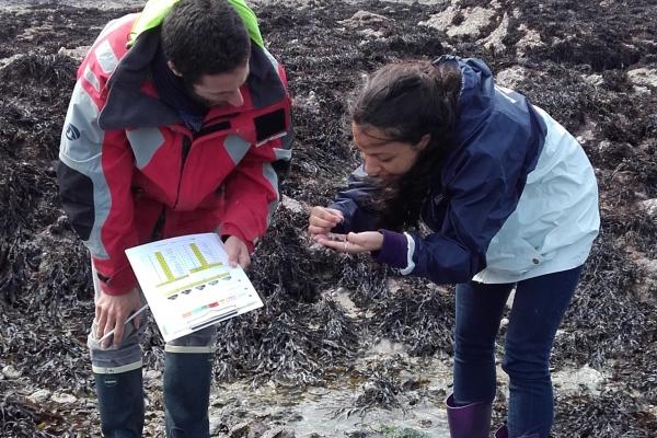 Estran de Dinard, avril 2016 : Ophélie et Tristan identifient les mollusques qu'ils ont repérés dans leur quadrat. © Marine Robuchon