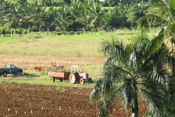 1st October 2014, Temporary position, Engineer, INRA Antilles-Guyane