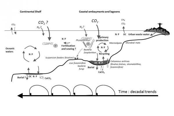 Les mécanismes de propagation de l'eutrophisation à l'interface Terre-Mer en région tropicale et les interactions entre les cycles biogéochimiques du Carbone, de l'Azote et du Phosphore et les organismes à la base du réseau trophique - G. Abril