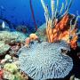 Peuplements coralliens © C Bouchon