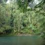 Ile de Choiseul Salomon - P. Keith